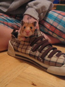 Strawberry the Hamster