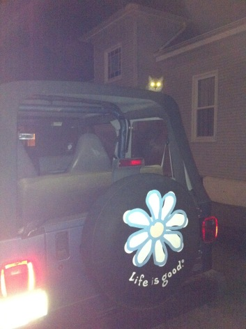 The glowing eyes of our cat on top of the Jeep
